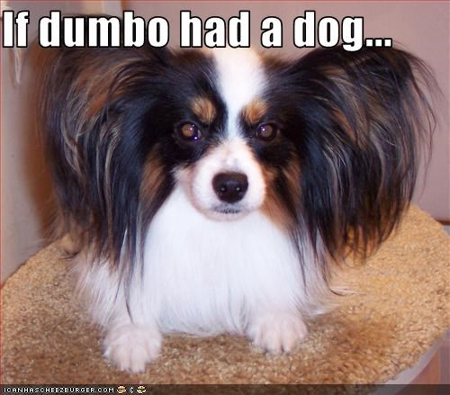 If dumbo had a dog...