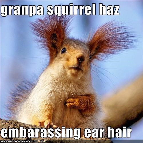granpa squirrel haz   embarassing ear hair