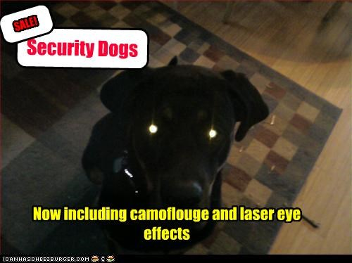 Now including camoflouge and laser eye effects