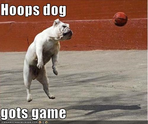 Hoops dog  gots game