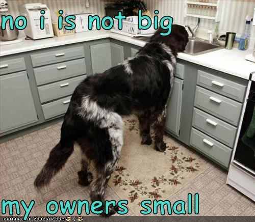 no i is not big  my owners small