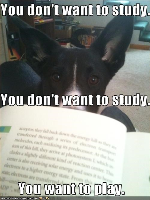 You don't want to study.  You don't want to study.  You want to play.