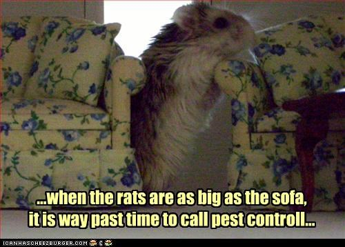 ...when the rats are as big as the sofa,  it is way past time to call pest controll...