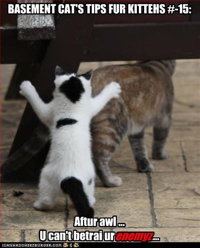 BASEMENT CAT'S TIPS FUR KITTEHS #-15:                 Aftur awl... U can't betrai ur enemyz...