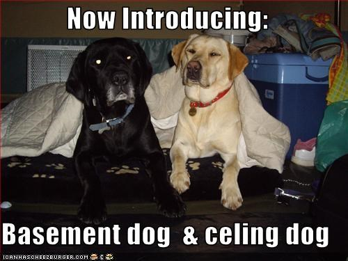 Now Introducing:  Basement dog  & celing dog