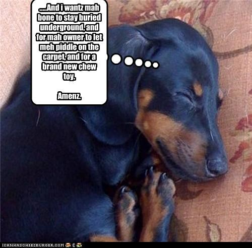 amen,bone,buried,carpet,chew,dachshund,pee,prayer,toys