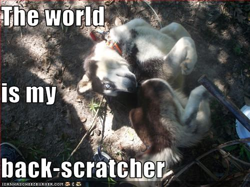 The world is my back-scratcher
