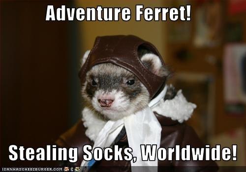 Adventure Ferret!     Stealing Socks, Worldwide!