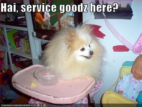 baby,Fluffy,high chair,pomeranian,puffy,restaurant,service