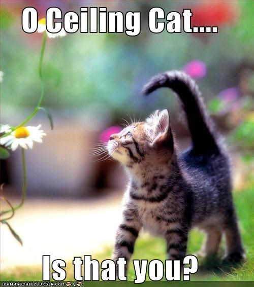 O Ceiling Cat....  Is that you?