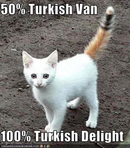 50% Turkish Van  100% Turkish Delight