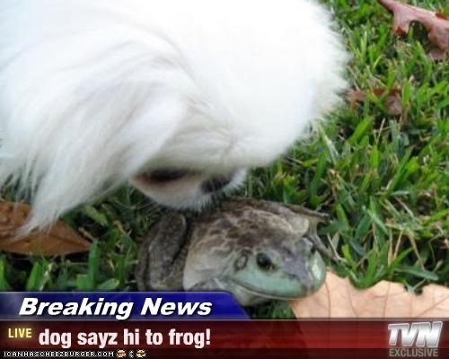 Breaking News - dog sayz hi to frog!