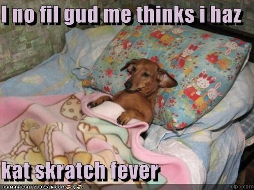 I no fil gud me thinks i haz  kat skratch fever