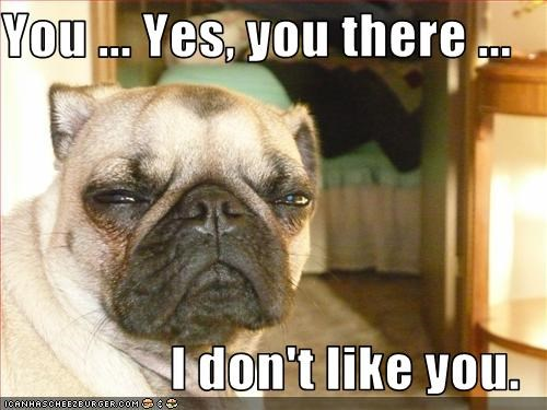 dislike,dont,grumpy,hate,pug