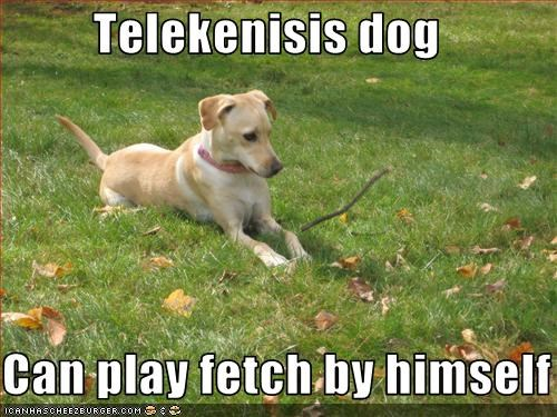 Telekenisis dog  Can play fetch by himself