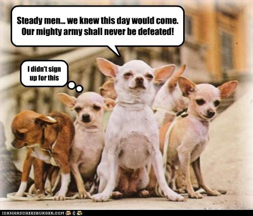 army,Battle,chihuahua,fight,mighty,tiny
