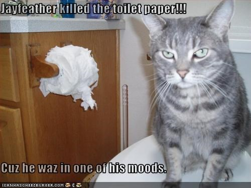 Jayfeather killed the toilet paper!!!  Cuz he waz in one of his moods.