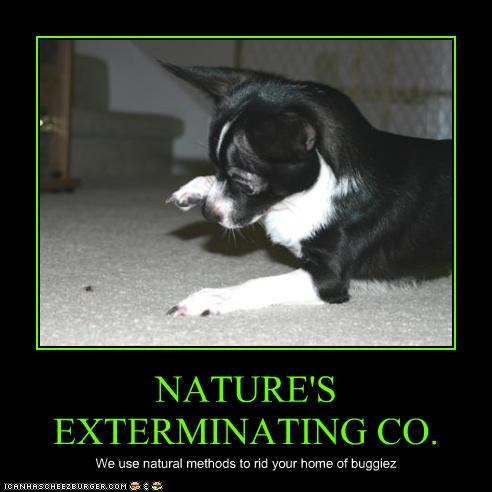 NATURE'S EXTERMINATING CO.