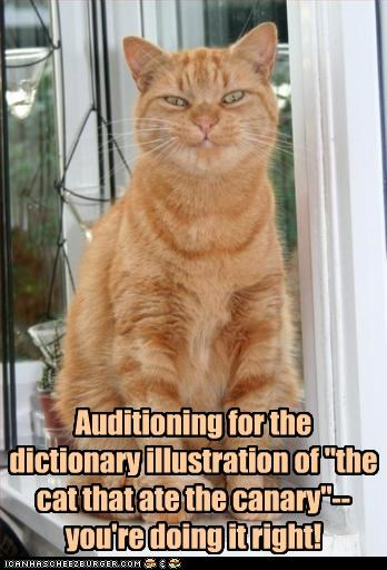 "Auditioning for the dictionary illustration of ""the cat that ate the canary""--you're doing it right!"