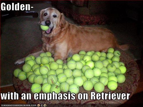 Golden-  with an emphasis on Retriever
