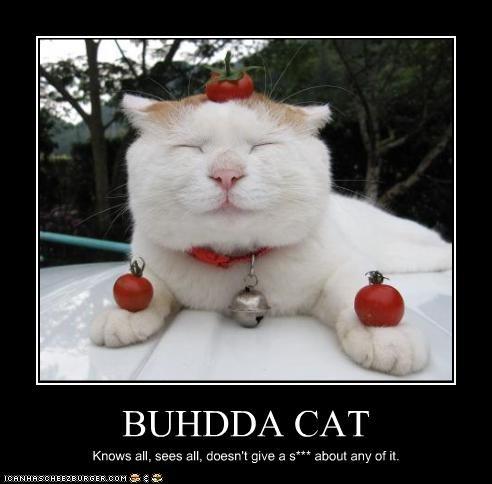 BUHDDA CAT