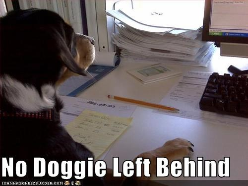 No Doggie Left Behind