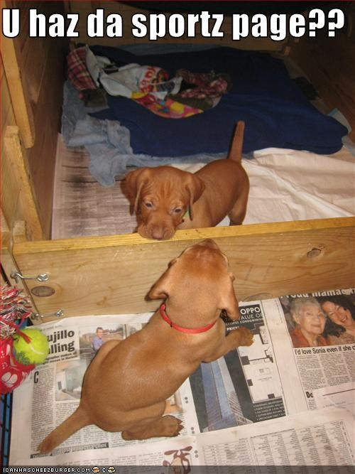 labrador,newpaper,potty,puppies,sports