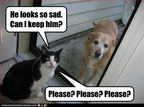 He looks so sad. Can I keep him?