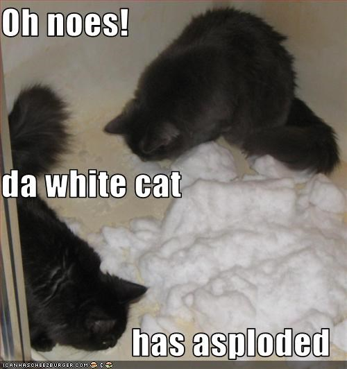 Oh noes! da white cat  has asploded