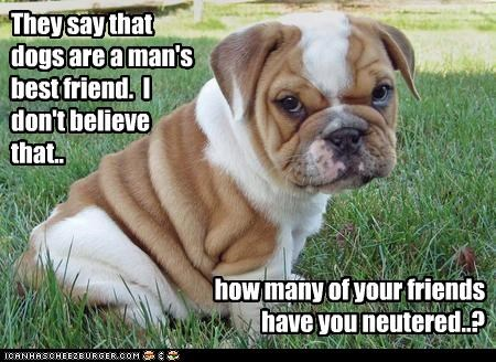 They say that dogs are a man's best friend.  I don't believe that..