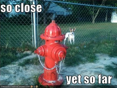 close,far,fire hydrant,jack russel terrier