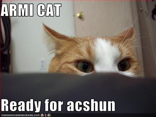 ARMI CAT  Ready for acshun