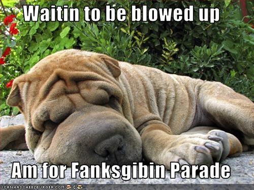deflated,parade,shar pei,thanksgiving,wrinkles
