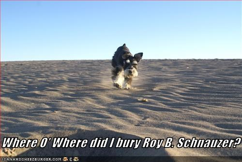 Where O' Where did I bury Roy B. Schnauzer?