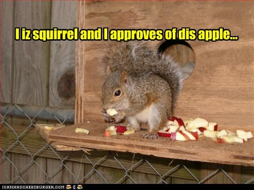 I iz squirrel and I approves of dis apple...