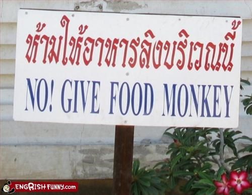 No! give food monkey