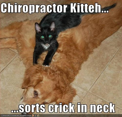 Chiropractor Kitteh...  ...sorts crick in neck