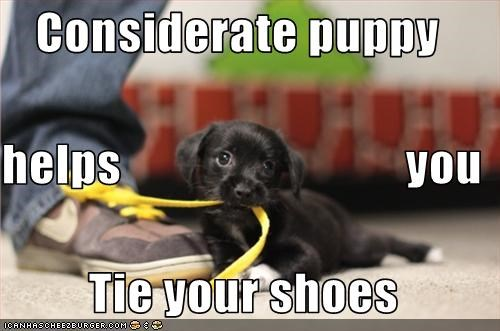 Considerate puppy  helps                             you  Tie your shoes