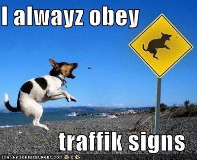 I alwayz obey  traffik signs