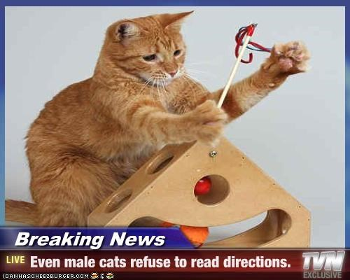 Breaking News - Even male cats refuse to read directions.