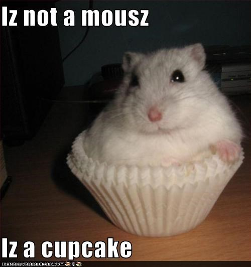 Iz not a mousz  Iz a cupcake