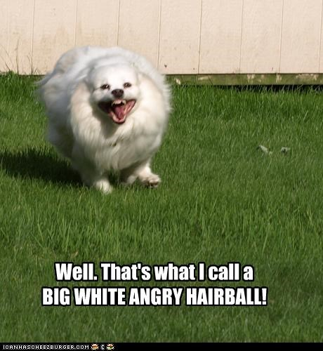 Well. That's what I call a BIG WHITE ANGRY HAIRBALL!