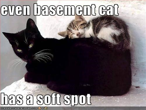 even basement cat  has a soft spot