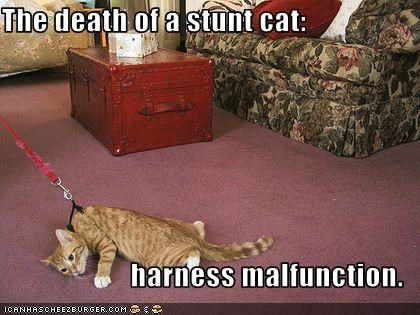 The death of a stunt cat:  harness malfunction.