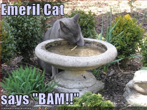 "Emeril Cat  says ""BAM!!"""