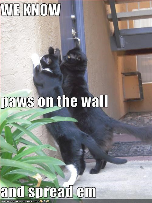 WE KNOW paws on the wall  and spread em