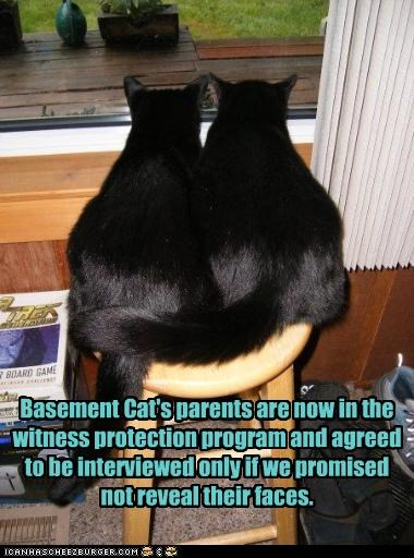 Basement Cat's parents are now in the witness protection program and agreed to be interviewed only if we promised not reveal their faces.