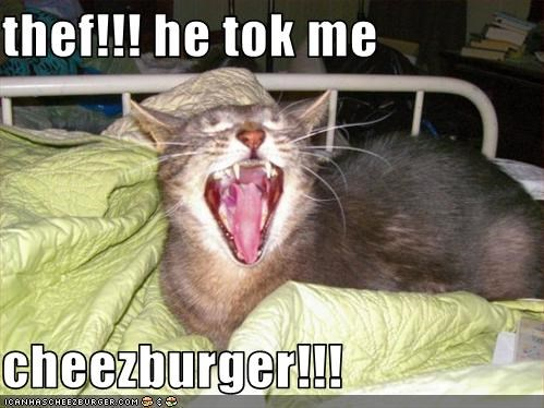 thef!!! he tok me   cheezburger!!!