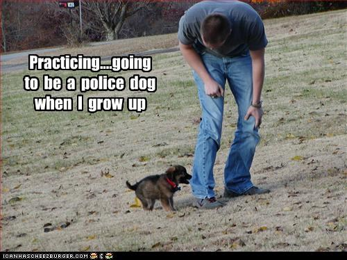 Practicing....going  to  be  a  police  dog  when  I  grow  up