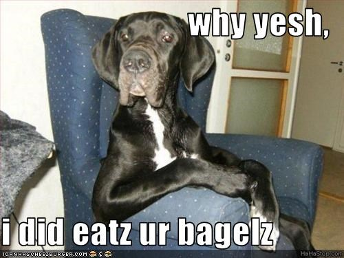 why yesh,  i did eatz ur bagelz